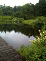 Dock by pond